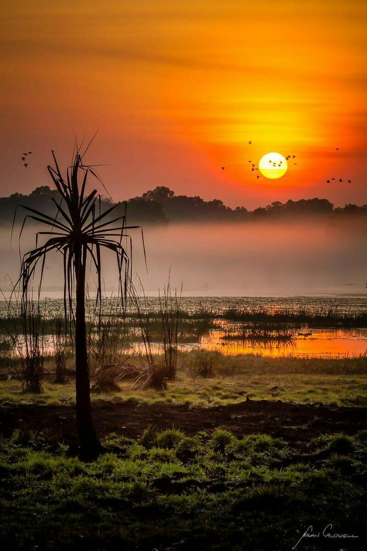 A misty sunrise at Snipe Lagoon. This amasing waterhole is within 15 mins of Darwins CBD and a real haven for waterbirds.