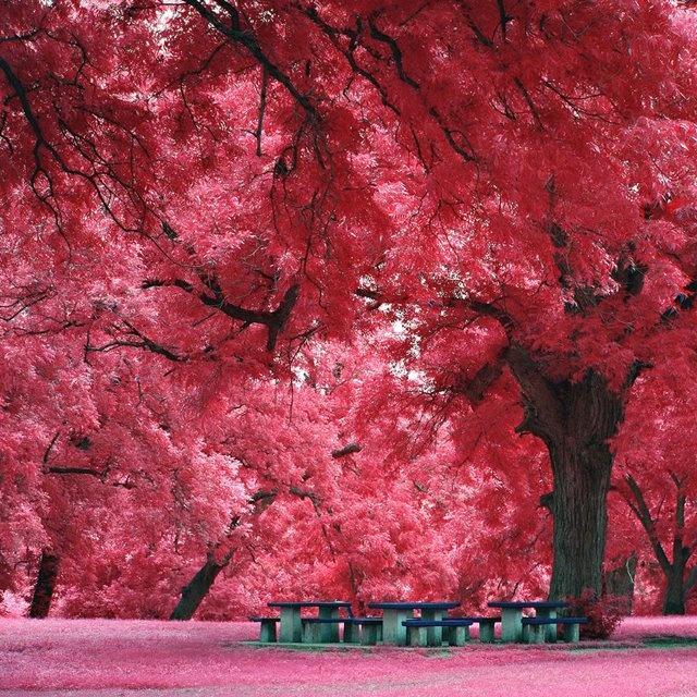 austin's trees