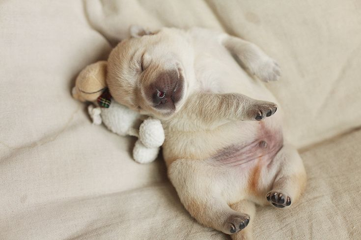 puppy with a cute fat belly.