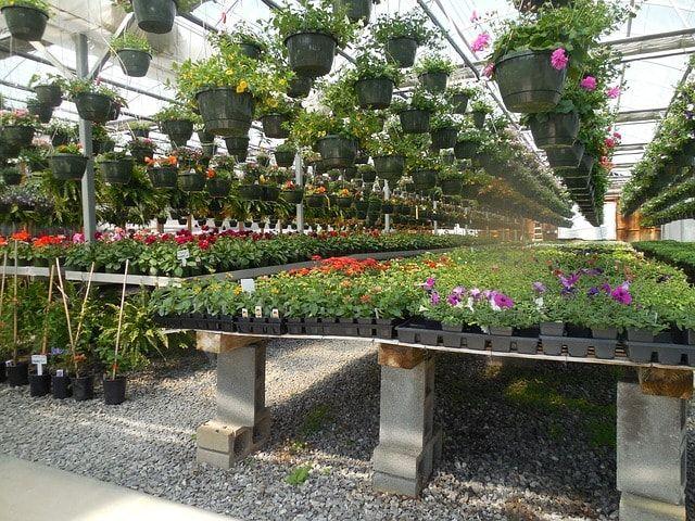 How To Start Plant Nursery Business Profitable