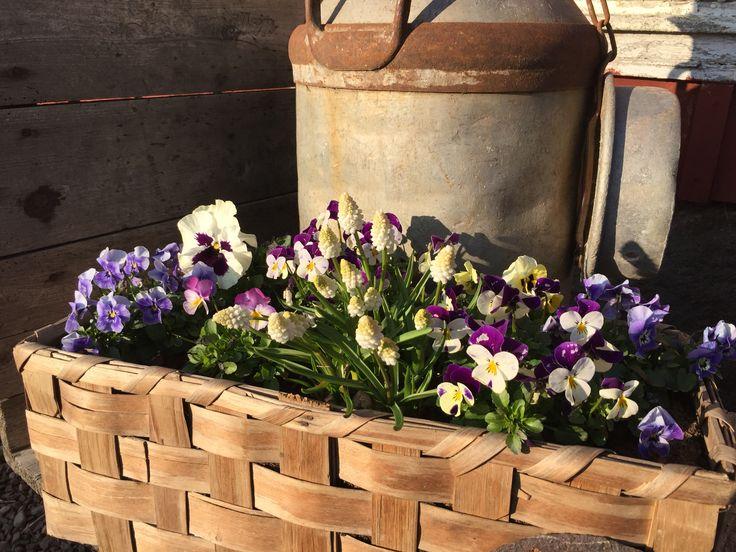 Spring in our garden!