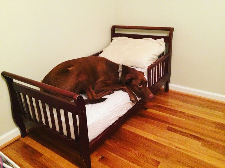 use a secondhand bed for an xxl dog bed
