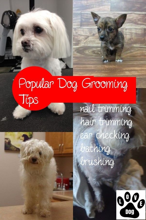 Most Preferred 5 Dog Grooming Tips Dog Grooming Tips Dog Grooming Canine Grooming