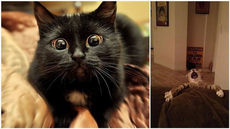 24 самых театральных кота в истории