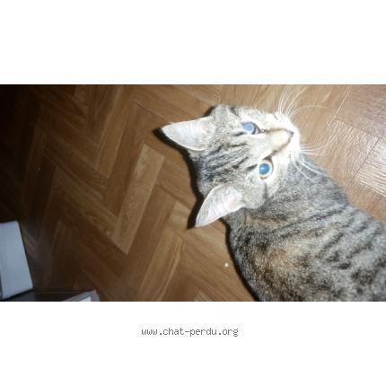 1000 id es sur le th me chats tabby gris sur pinterest chats tabby chats blancs et chats ragdolls. Black Bedroom Furniture Sets. Home Design Ideas