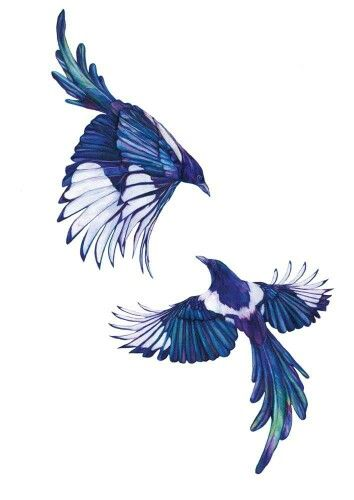 Birds Tattoos Illustrations: 87 Best Images About Magpies On Pinterest