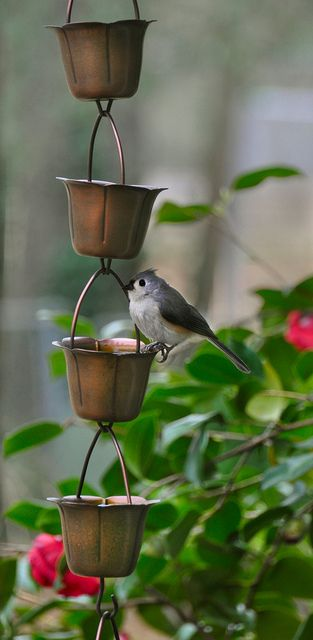 cute rain chain, outdoor decor, home, water management, give the birds a drink.