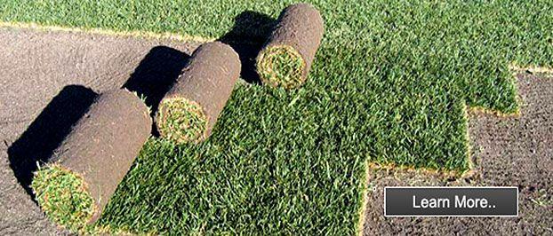 instant turf