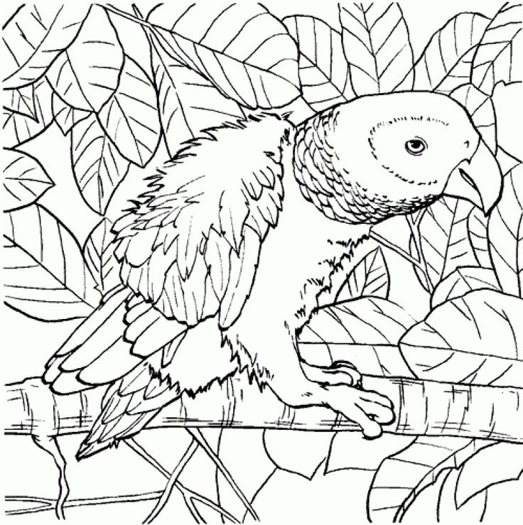 Parrot Online Coloring Pages For Children