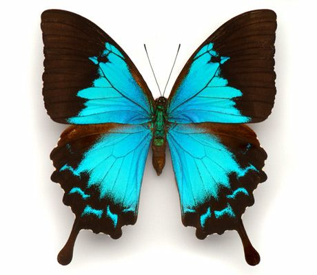 Not sure what kind of butterfly this is but its color is GORGEOUS!!