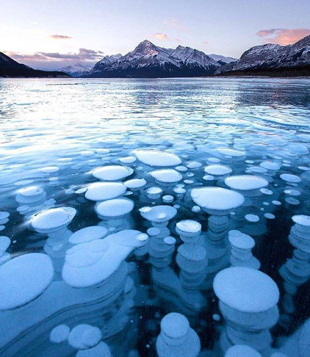 Frozen bubbles trapped in Abraham Lake #Alberta #Canada  Photo: @calsnape #wildernessculture