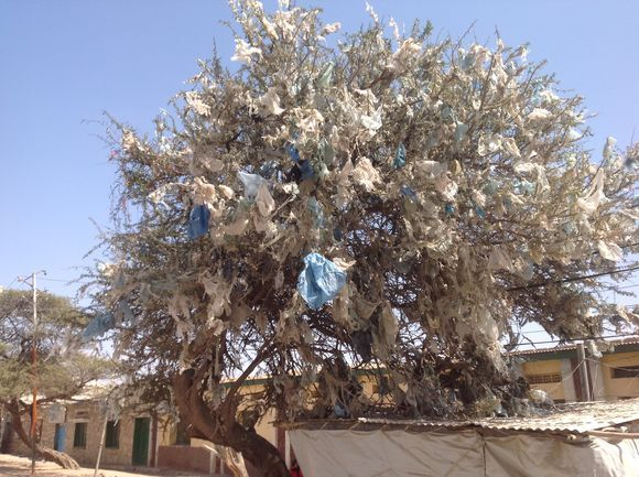 Tree covered by plastics
