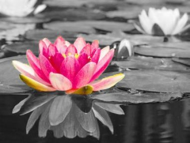 98 best black and white with colour images on Pinterest