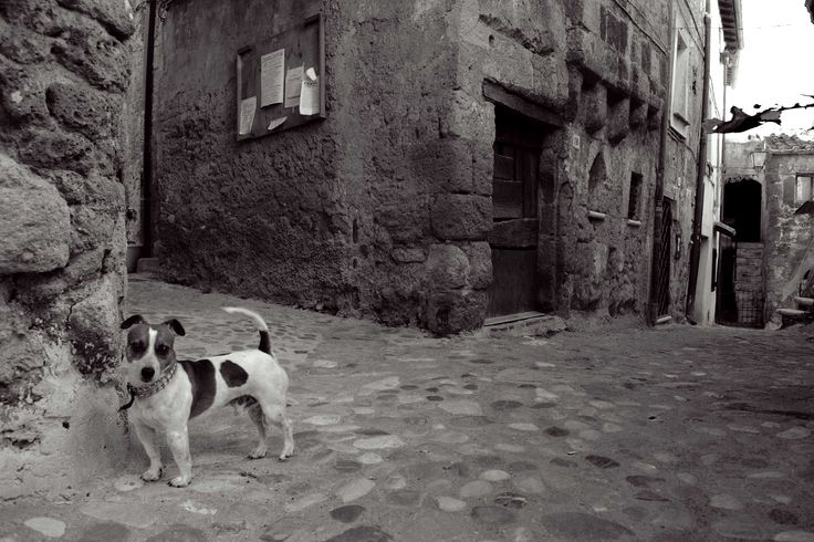 Jack Russell, in Calcata, Italy