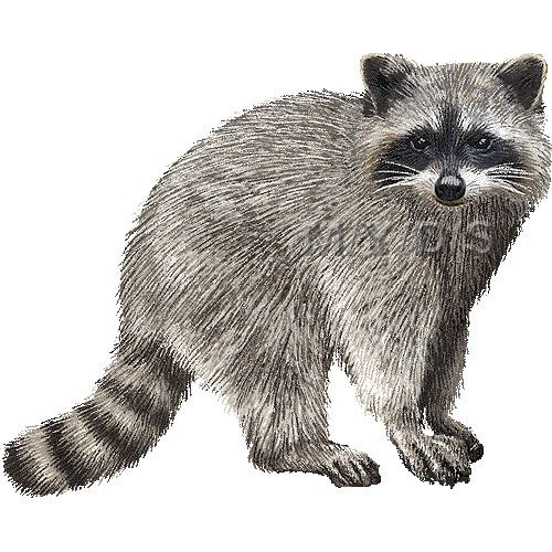 Raccoon clipart picture large clip art animals for Graphics clipart