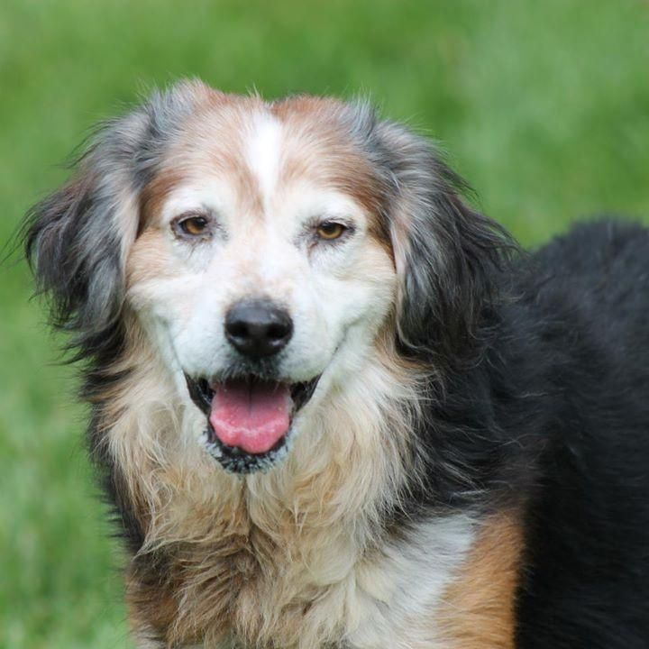 Marion County Humane Society Adoptable Dogs