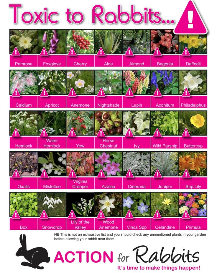Plants TOXIC to Rabbits, bunnies - remember to check all houseplants and green plants online or in print before letting your bunny near or feeding any of them! poster via www.actionforrabbits.co.uk