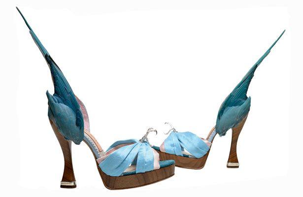 """Parakeet shoes: """"Sittich""""-Modell von Caroline Groves aus Satin, Krallen und Federn, England 2014 © Photography by Dan Lowe"""