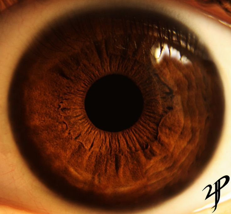 187 best images about Eye on Pinterest | Eye color, Irises ...