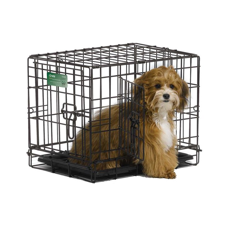 Midwest+iCrate+Double+Door+Folding+Dog+Crates+-+For+pets+1-6+lbs.+The+dog+crate+comes+to+you+equipped+with+every+feature+you+can+think+of;+double+door,+a+composite+plastic+pan,+plastic+carrying+handle,+safe+and+secure+slide+bolt+latches,+and+most+importantly+a+free+divider+panel. - http://www.petco.com/shop/en/petcostore/midwest-icrate-double-door-folding-dog-crates