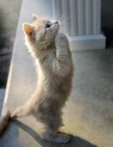 pray: The Lord, Dear God, Cute Baby, Kitty Cat, Funny Pics, Funny Cat, Adorable Kittens, Cute Pet, Cat Lovers