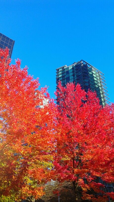 Vancouver fall color photo by JerrySmith