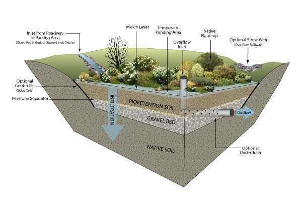 Rain garden cross section environmental services kiosk for Biofiltration pond