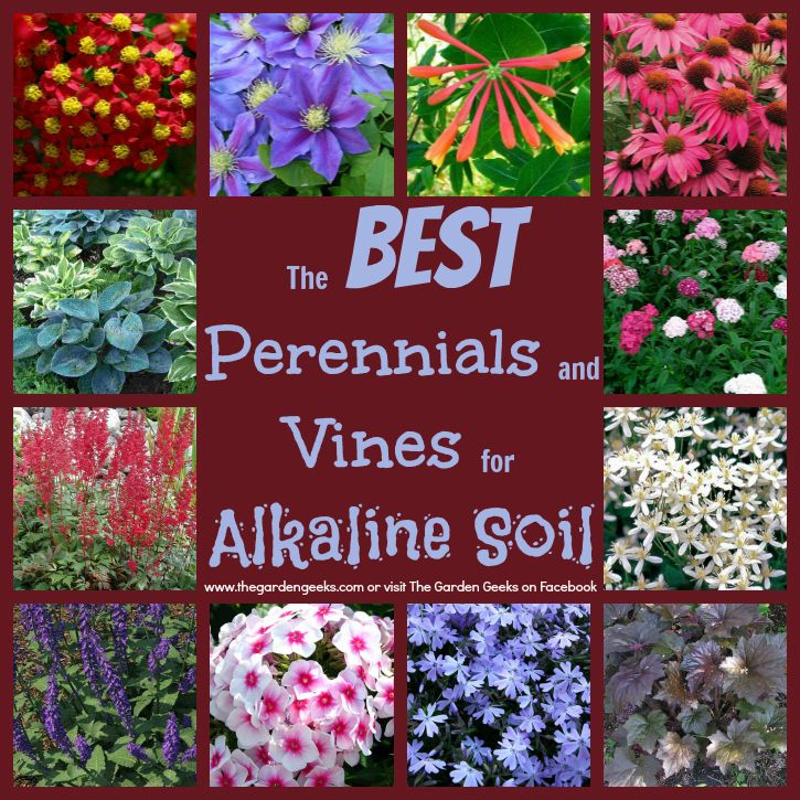 how to make soil alkaline naturally