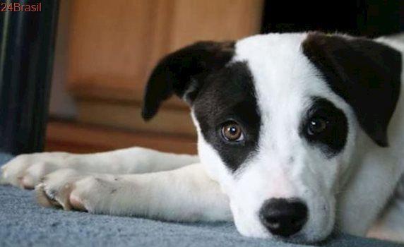 Fotos emocionantes mostram cães abandonados sendo recebidos em novos lares