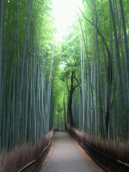 (Kitasaga Bamboo Grove)