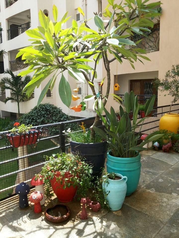balcony garden-My Sunny Balcony