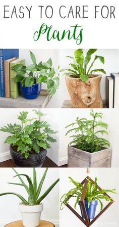 Easy house plants!