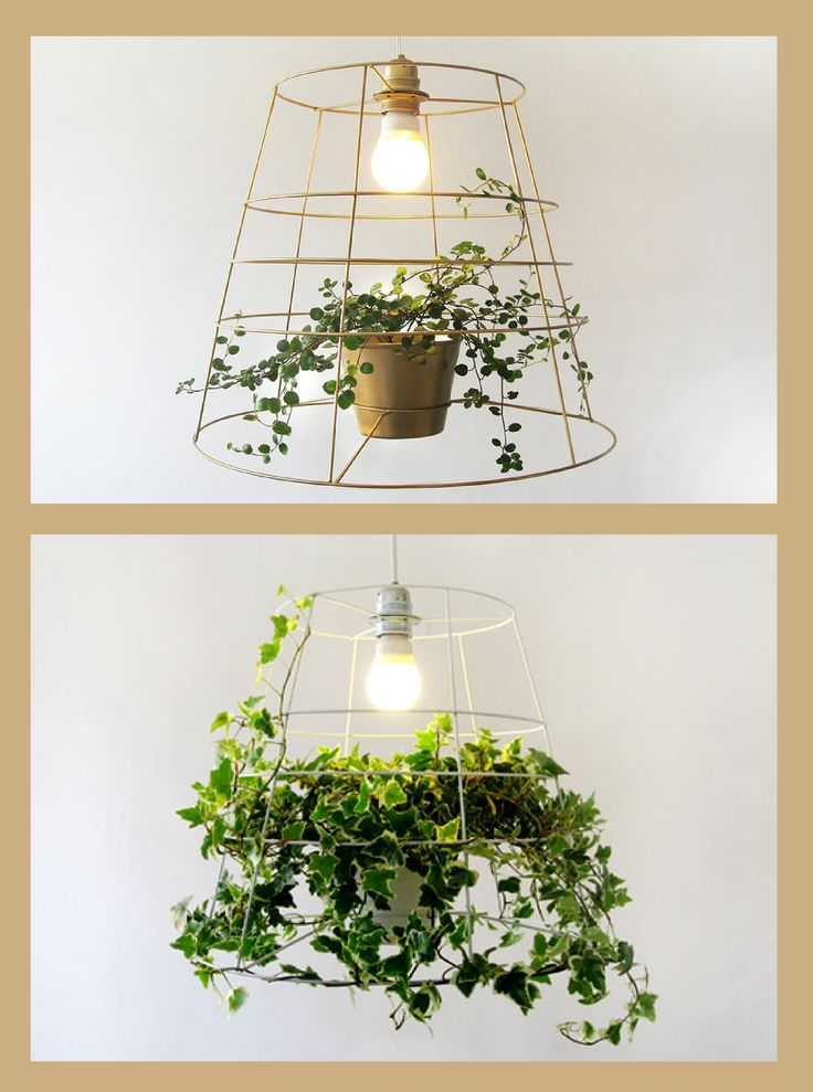Behold the photosynthesis lamp: lamp made of a metal grid with a vine at its base. As the vine grows, it creates a natural lampshade. It was designed by the studio @MeiravBarzilay to bring eco-friendly light and nature into your home http://www.meiravbarzilay.com/index.html/#!photosynthesis/cfy6