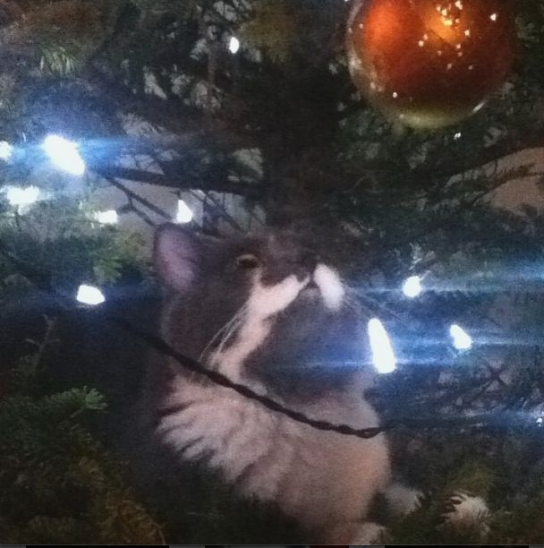 This is a memory in my house when rocky used to go in the christmas tree :(
