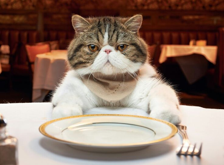 Best Welcome To Vivino Images On Pinterest The Ojays - Meatball the fat cat kept eating everyones food so his owners came up with a clever solution