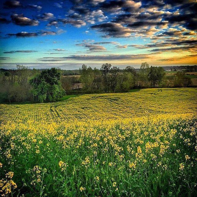Bravo à @timotyboy pour cette photo prise à Aussonne dans le département de la Haute-Garonne. Très beau paysage et de belles couleurs ! #tourismehg #TourismeMidiPy #france #garonne #hautegaronne #aussonne