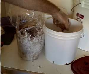 how to use coffee grounds to grow mushrooms