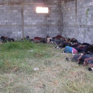 #DESTACADAS:  CNDH califica como grave violación de DD.HH. la masacre de San Fernando, México - teleSUR TV