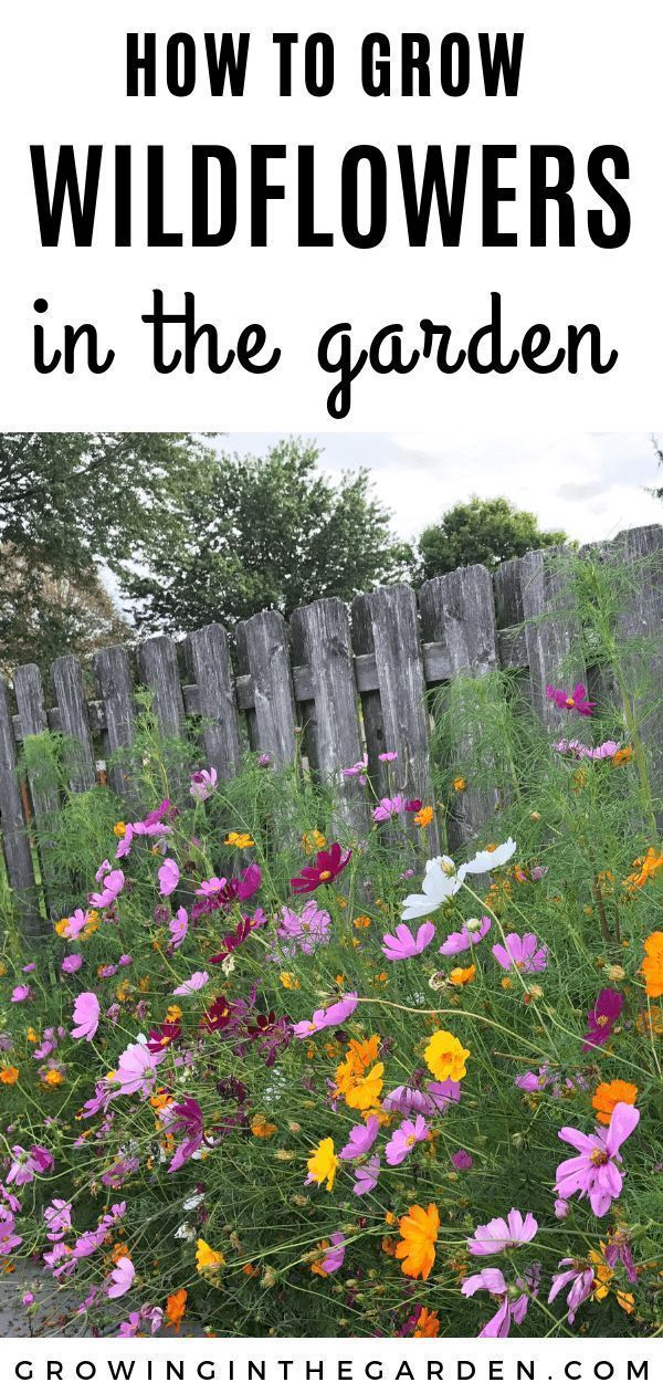 Learn How To Grow Wildflowers Flowers Are A Beautiful Addition To Any Backyard Garden Growing In The Ga In 2020 Grow Wildflowers Backyard Flowers Wildflower Garden