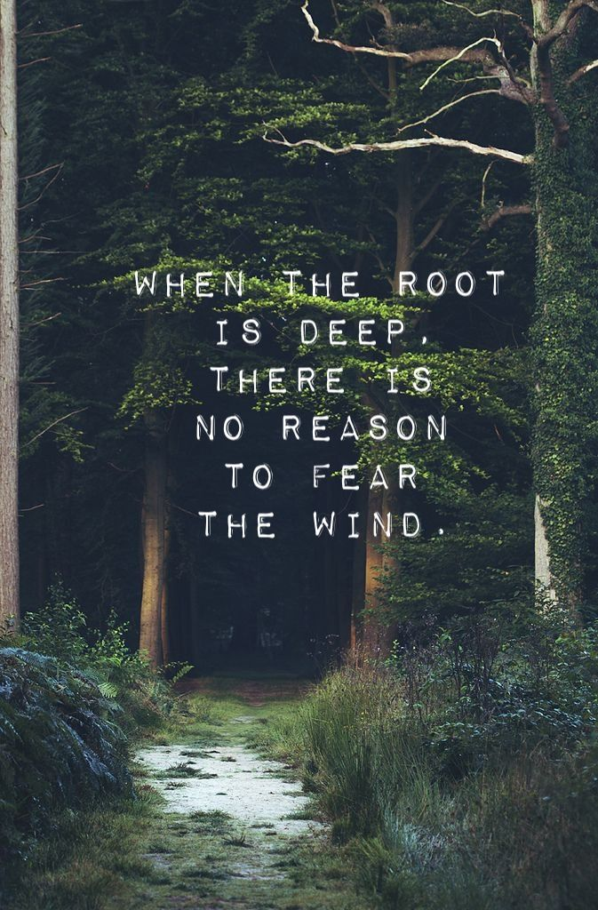 """When the root is deep, there is no reason to fear the wind."" Typo by ES"