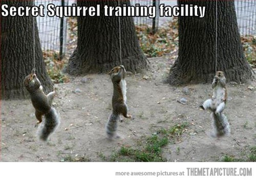 Secret Squirrel Protect Your Nuts Patch: 20 Best Secret Squirrel Images On Pinterest
