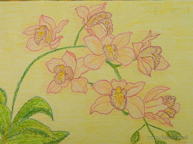 orhidee-roz-jpg1354202283.jpg