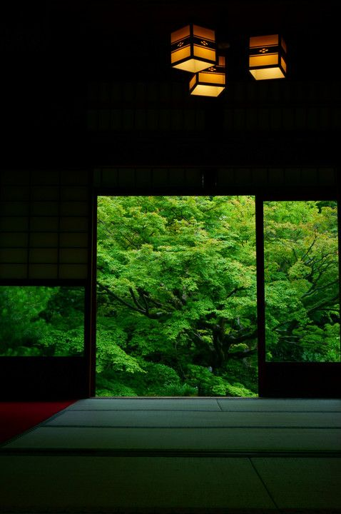 Unryu-in temple, Kyoto, Japan 雲龍院 #緑 #Green #Kyoto