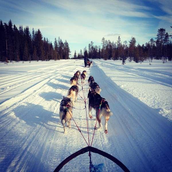 Fahrt mit dem Hundeschlitten in Schwedisch Lappland