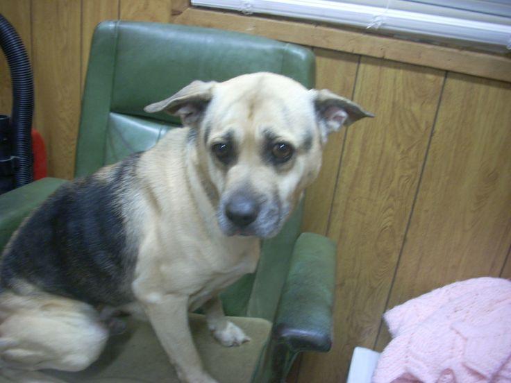 Canton Ohio Dog Adoption