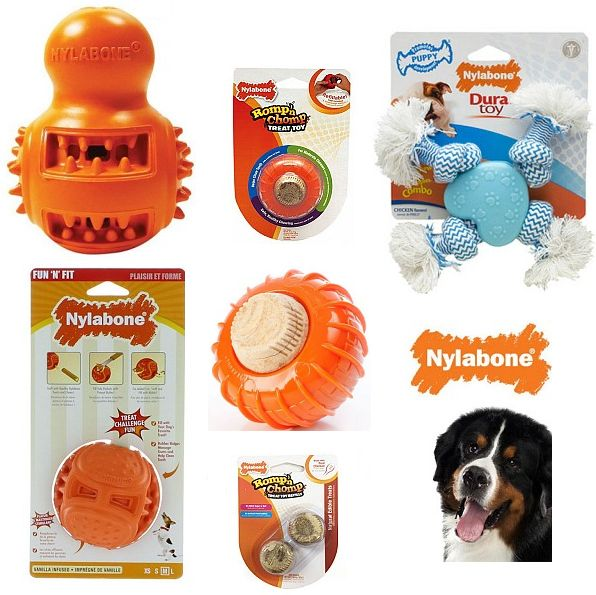 Big Sale On Nylabone Dog Treat Toys And Puppy Toys Free Shipping