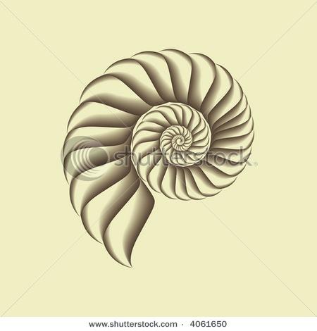 spiral shell | Tattoos | Pinterest | Shells and Spirals