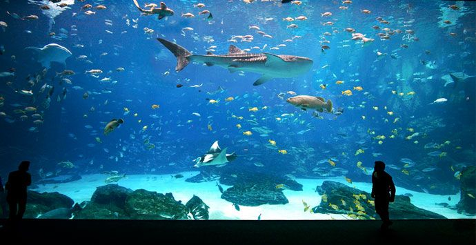 Best 25 georgia aquarium ideas on pinterest largest Aquarium in georgia