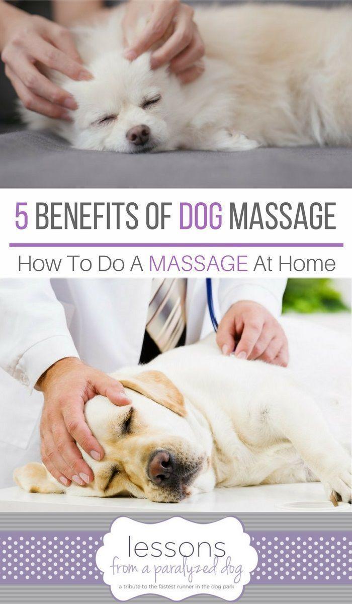 7 Benefits Of Dog Massage Dog Training Dogs Dog Care
