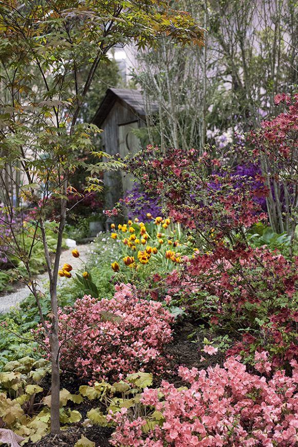 Best 25+ Woodland Garden Ideas On Pinterest | Forest Garden
